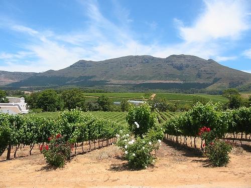 vitigno sudafrica