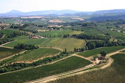 vigneto vino rosso di montepulciano