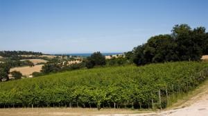 vitigno Cantine Fontezoppa