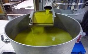 marconi silvano olio extravergine di oliva