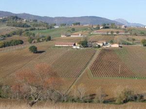 azienda agricola Borgo Paglianetto